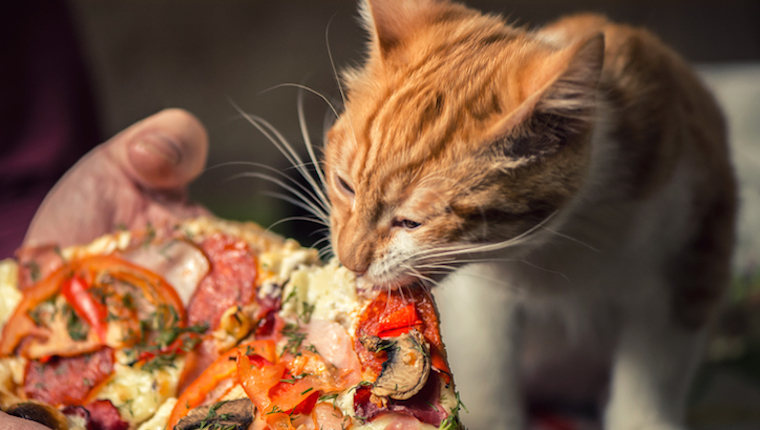 Can Cats Eat Pizza Is Pizza Safe For Cats Cattime