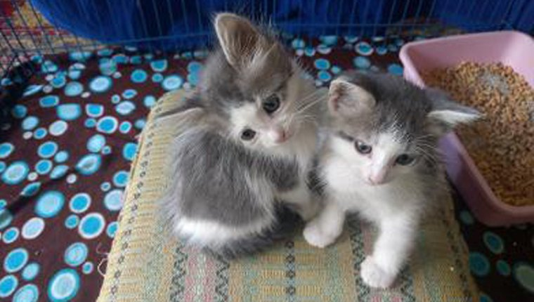 two kittens in their crate