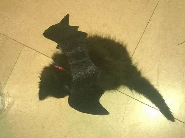 Bat Kitten Will Swoop Into Your Heart