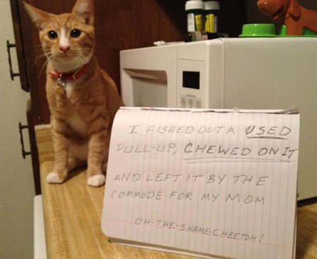 15 Funny Pictures Of Public Cat Shaming Cattime