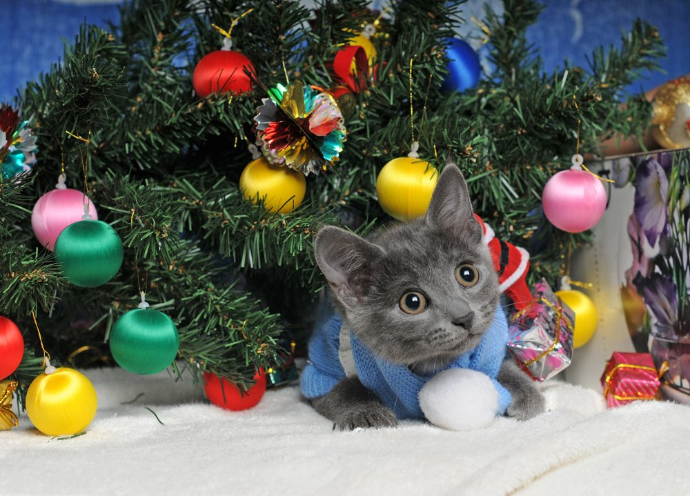 20 Cats Posing For Their Christmas Cards Pictures Cattime