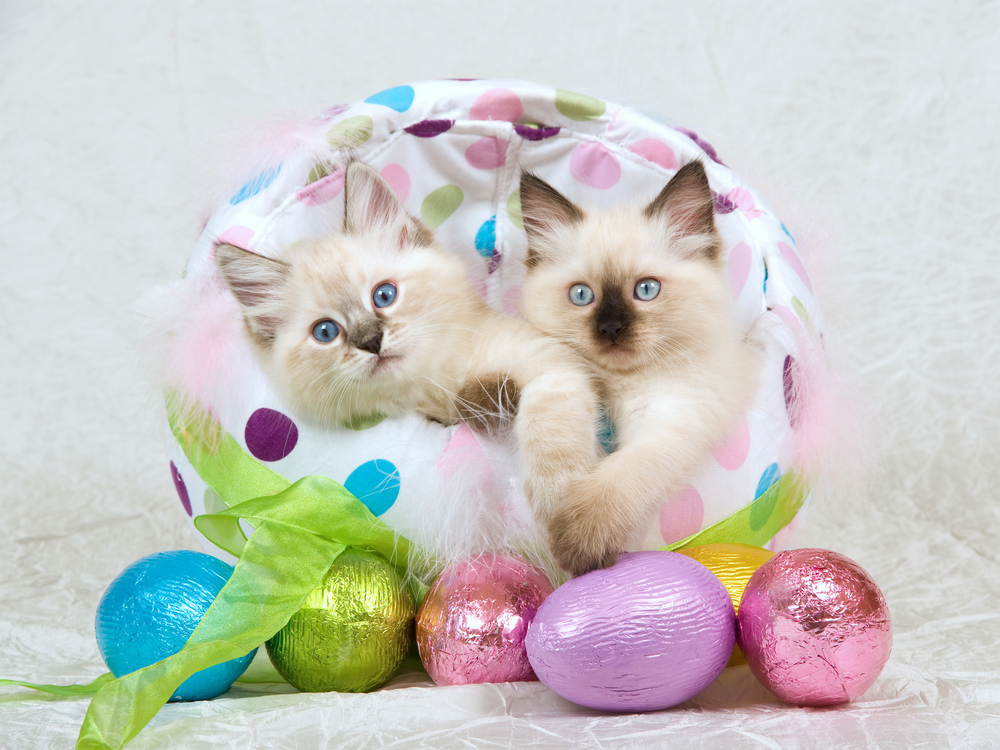 25 cats who are ready for easter   cattime
