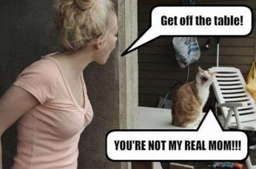 Not Funny Cat Meme : Funny cat memes that will make you lol