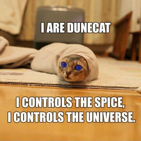 Funny Cat Memes That Will Make You LOL - 8 cat puns that will put a smile on your face