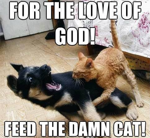 funny cat bites dog memes 25 funny cat memes that will make you lol