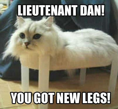 funny forrest gump parody cat memes 25 funny cat memes that will make you lol