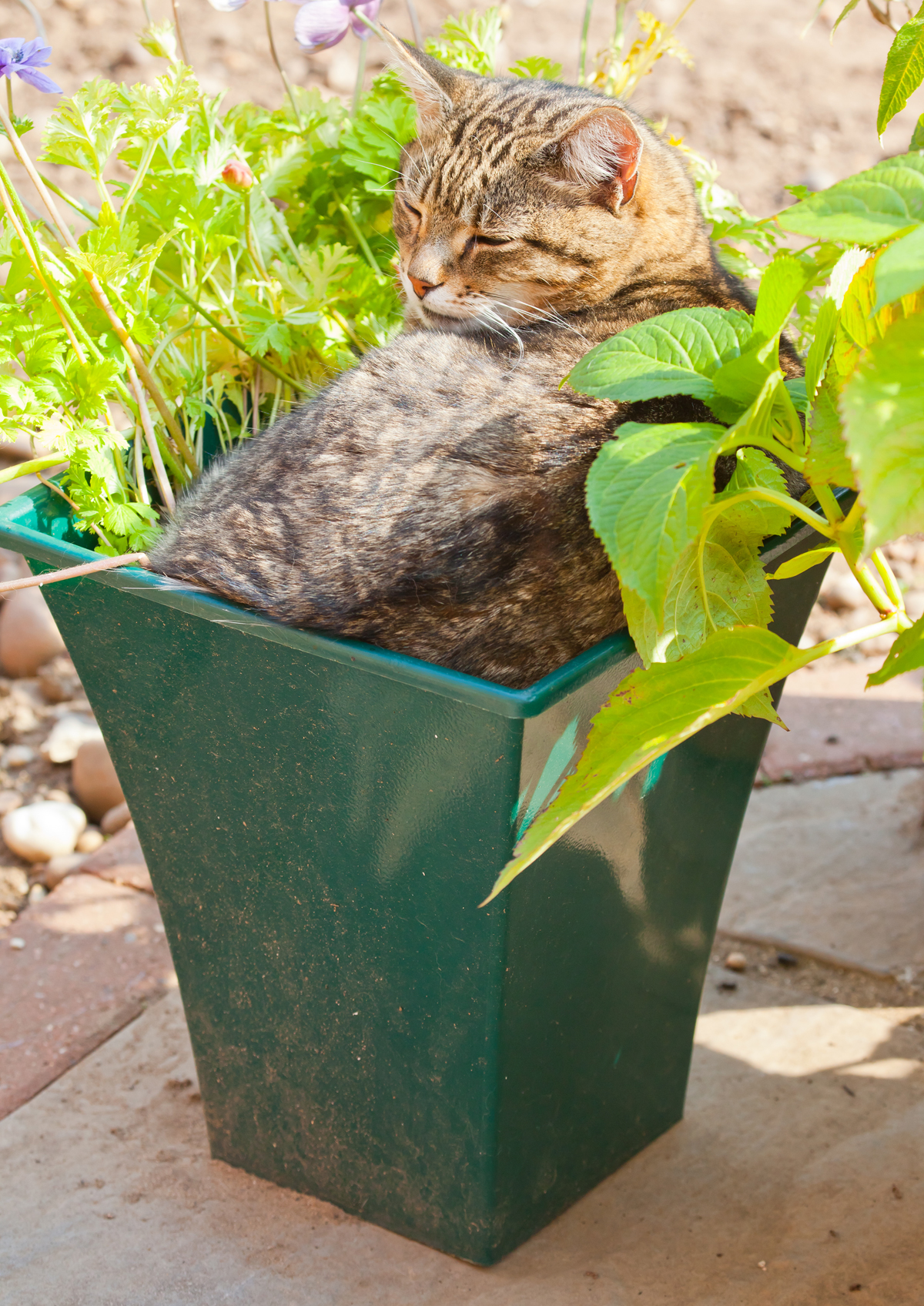 Funny Cat On Pot