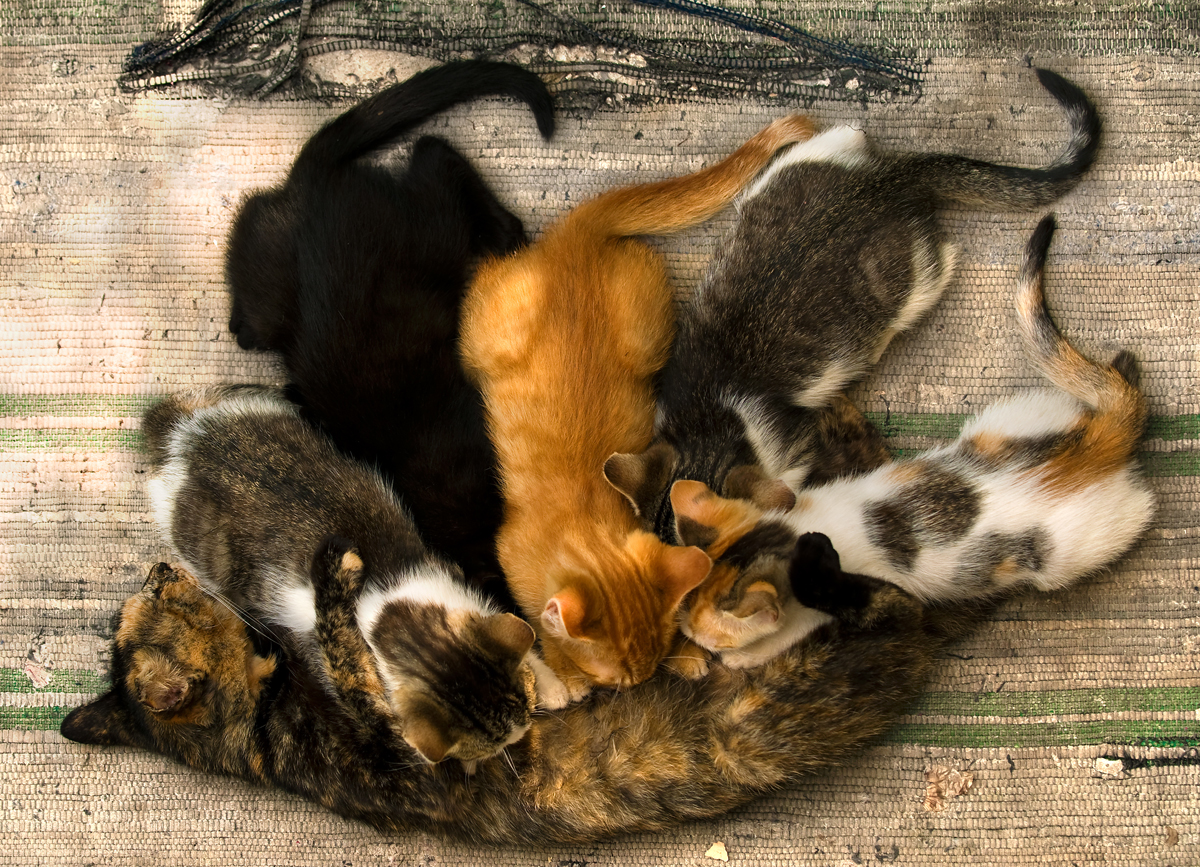 for mother u0027s day 25 pictures of mama cats and their kittens cattime