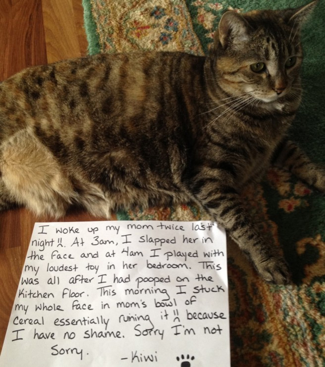 25 Pictures Of Cat Shaming   CatTime