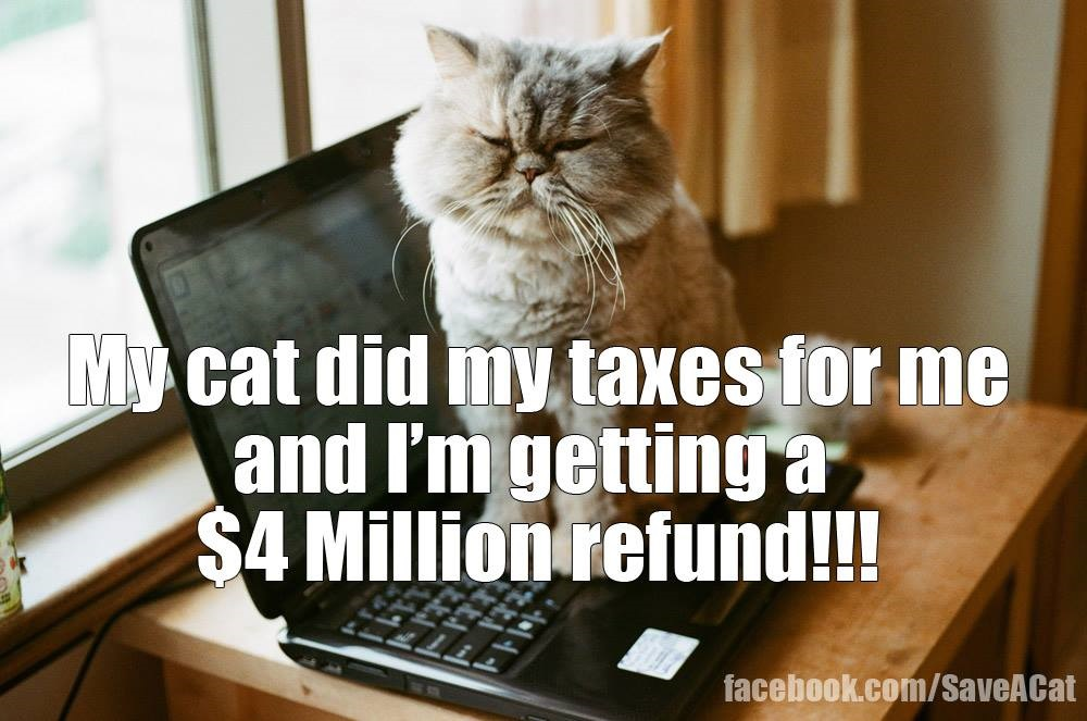 My Cat Did My Taxes