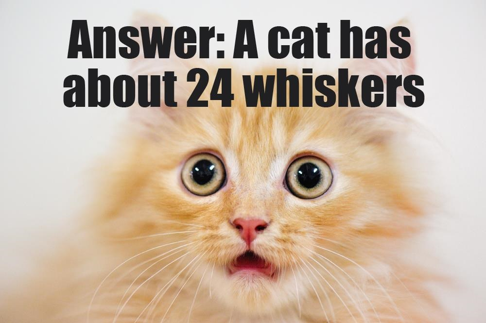 24 Whiskers