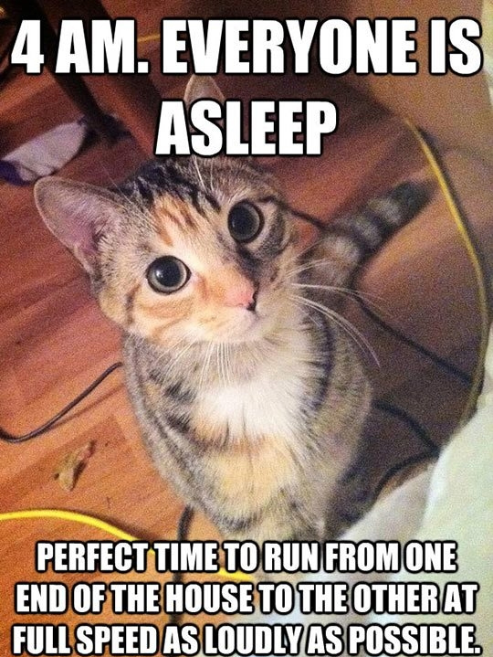 cat meme cat is about to run around house in middle of night strange cat behaviors only cat owners will understand explained