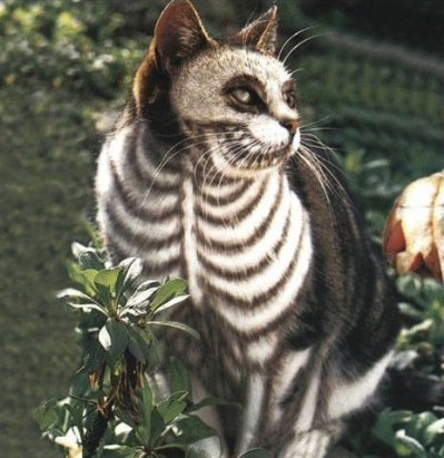 30 awesome dog and cat halloween costumes slideshow