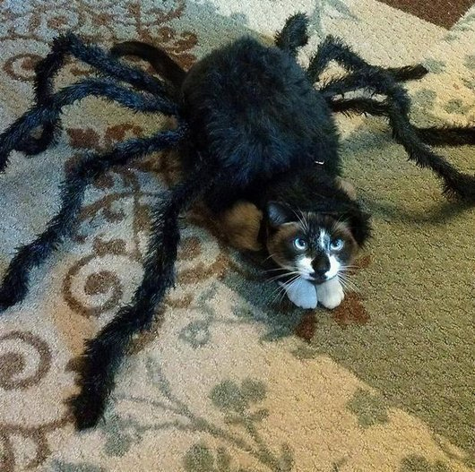 Previous thumbs & 30 Awesome Dog And Cat Halloween Costumes [SLIDESHOW] - CatTime