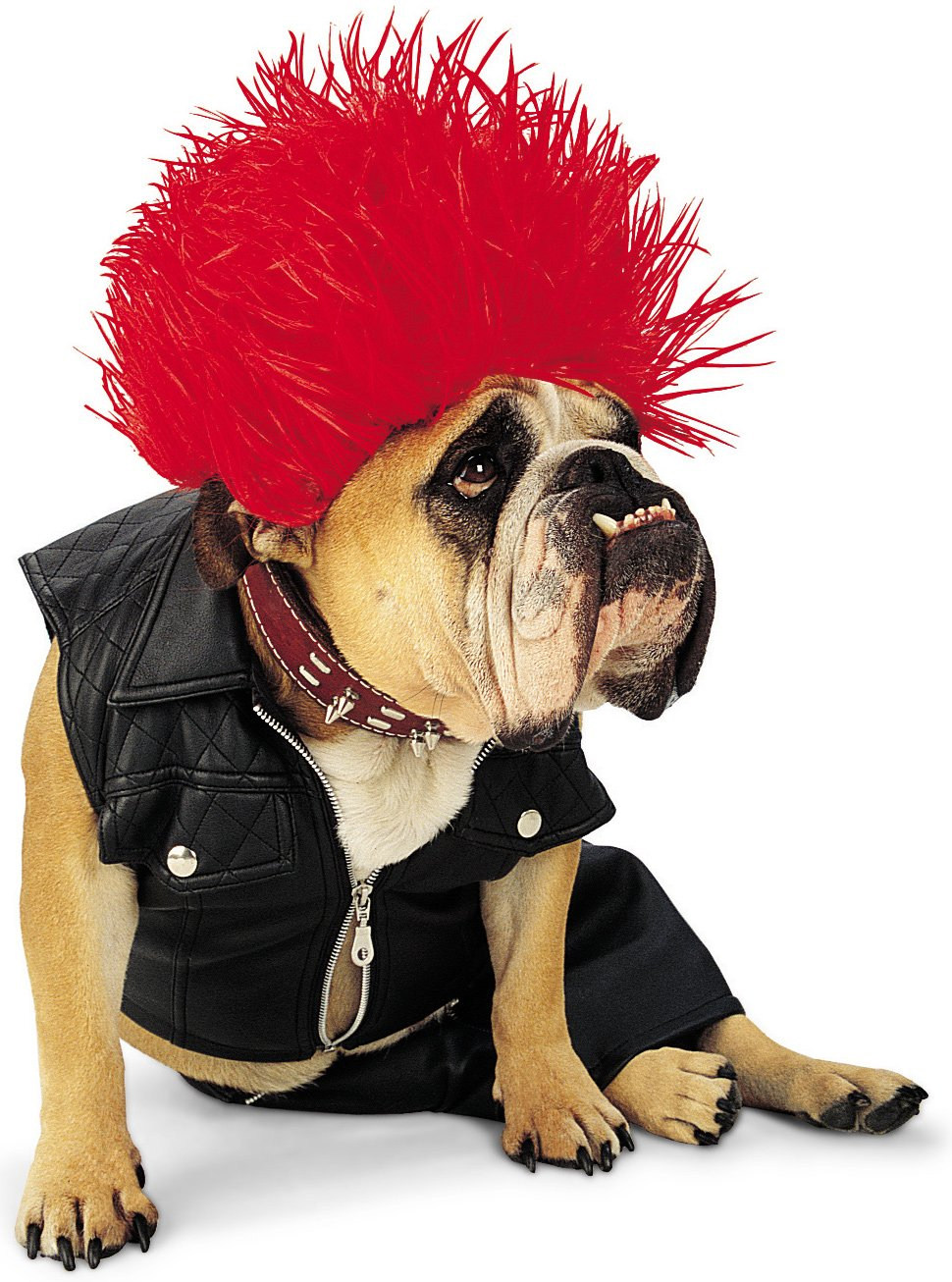 30 awesome dog and cat halloween costumes slideshow - Dogs With Halloween Costumes On