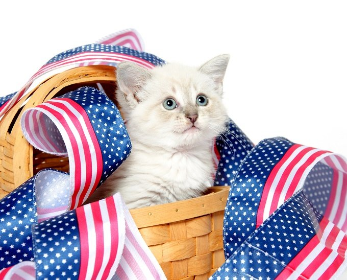 A Basket Of USA Cat!