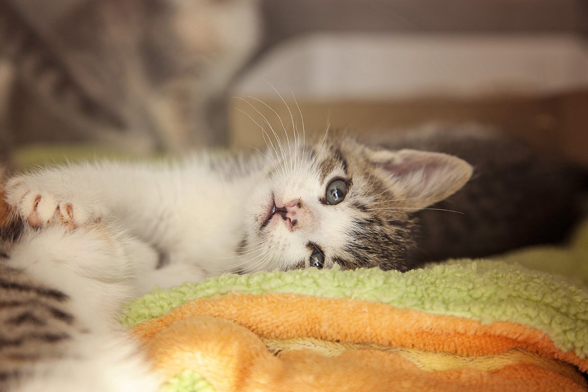 Nurseries Give Newborn Kittens A New Chance At Life CatTime